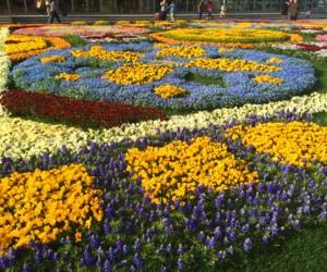 цветочный сад 2015
